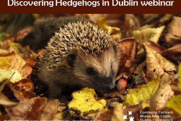 DCCweb_Discovering Hedgehogs in Dublin